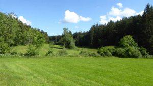 Stockerbach Quellgebiet in der Beehwiese