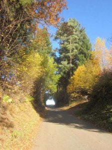 Hohlweg Rothweg im Herbst